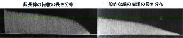 超長綿と一般的綿の繊維長比較